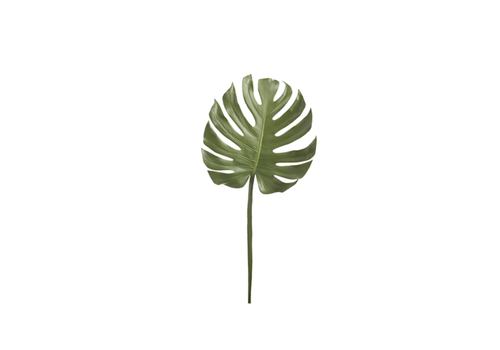 "12"" Monstera Leaf"