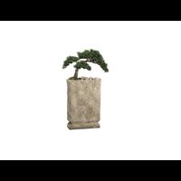 """32H12W17""""L Cedar Bonsai in Pot"""