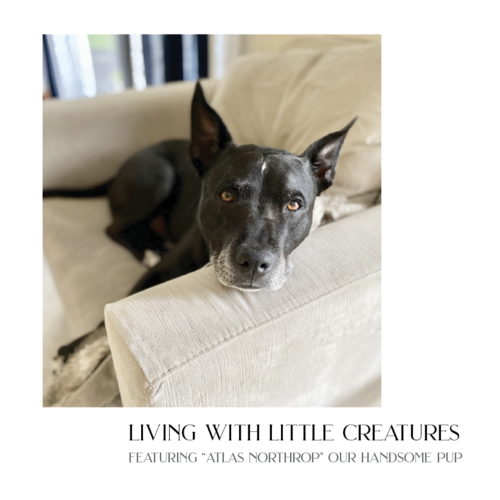 { the 2nd }   Living with little creatures
