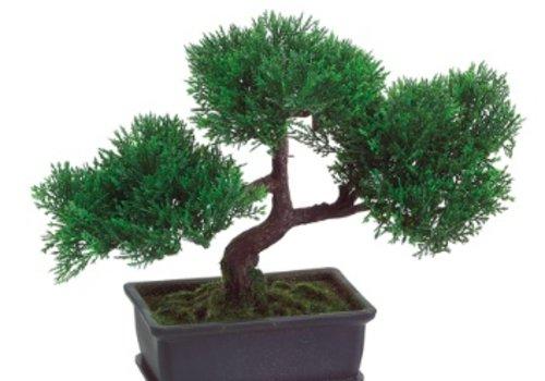 """9"""" Cedar Bonsai"""