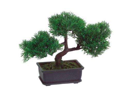 9' Cedar Bonsai