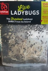 Lady Bugs Direct LIVE Lady Bugs 1,500 Count (Approximate)