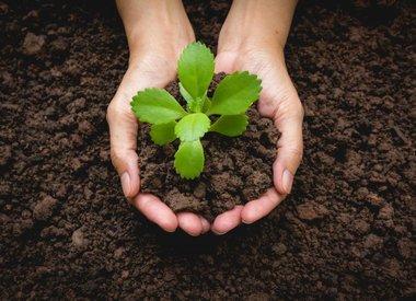Soil & Media