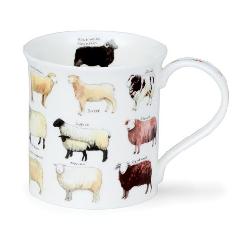 Dunoon Dunoon Bute Animal Breeds Sheep