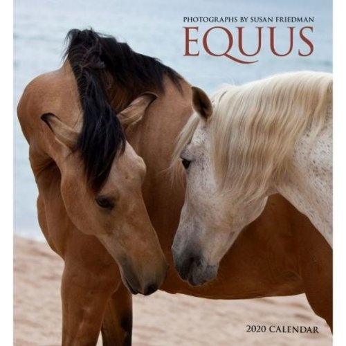 Pomegranate Equus 2020 Wall Calendar