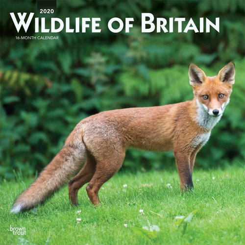 Wildlife of Britain Calendar 2020