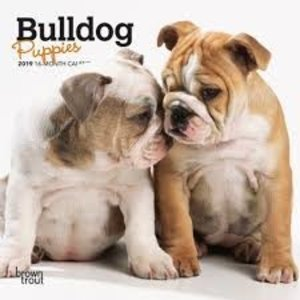 BrownTrout Publishers Bulldog puppies 2021 16 Month Mini Calendar