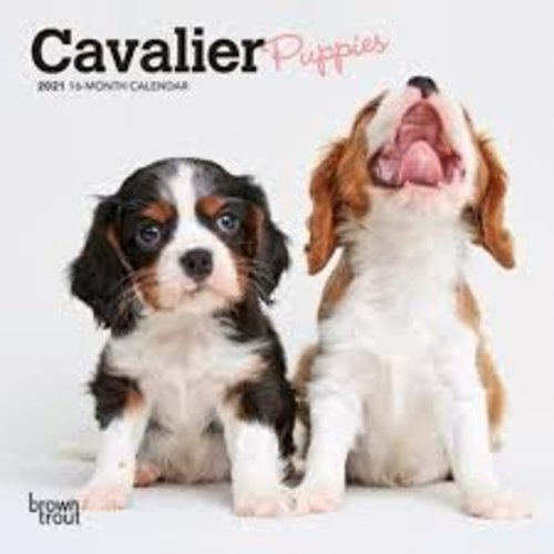 BrownTrout Publishers Cavalier puppies 2021 16 Month Mini Calendar
