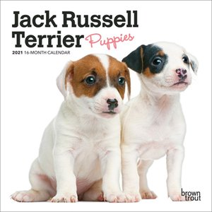 BrownTrout Publishers Jack Russell Terrier Puppies 2021 16 Month Mini Calendar