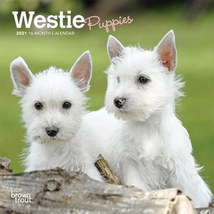 BrownTrout Publishers Westie Puppies 2021 16 Month Mini Calendar