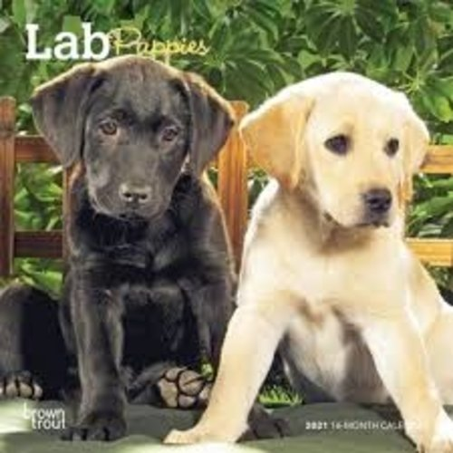 BrownTrout Publishers Lab Puppies 2021 16 Month Mini Calendar