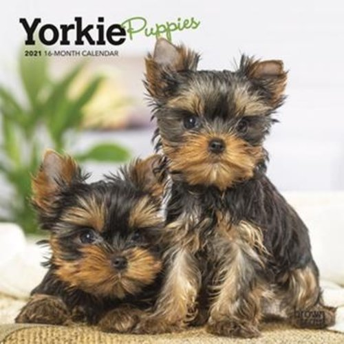 BrownTrout Publishers Yorkie Puppies 2021 16 Month Mini Calendar