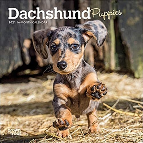 BrownTrout Publishers Dachshund Puppies Calendar