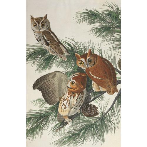 Audubon Owls Cards and Envelopes