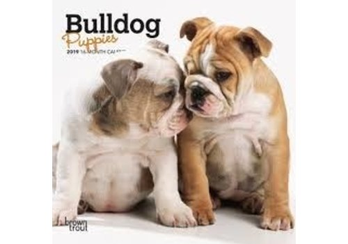 BrownTrout Publishers Bulldog puppies 2022 Mini Calendar