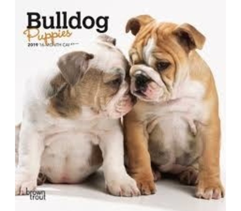 Bulldog puppies 2022 Mini Calendar