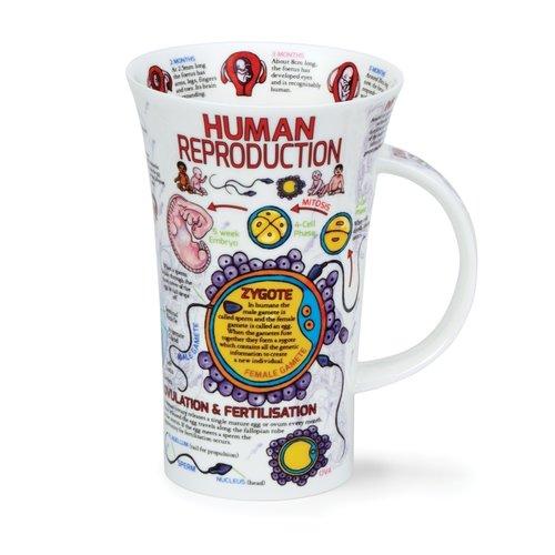 Dunoon Dunoon Glencoe Human Reproduction Mug