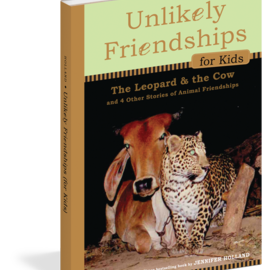 Unlikely Friendships: The Leopard & The Cow