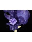 Elbo Purple Drop:  Eusheen Collab Recyclerdactyl