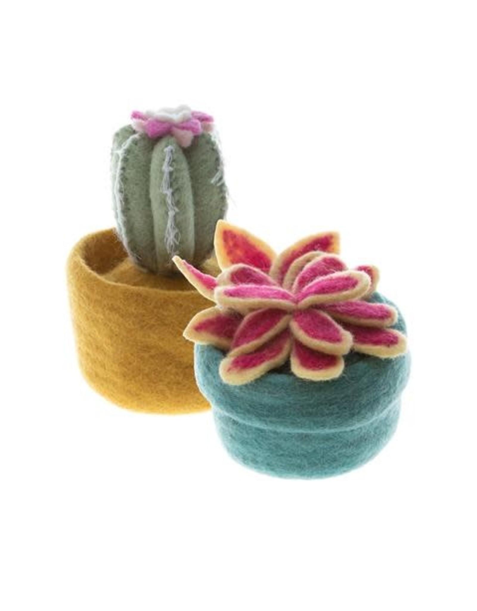 Nepal, Cactus and Succulent Pots - Light Teal Pot /Yellow OR Pink Petals