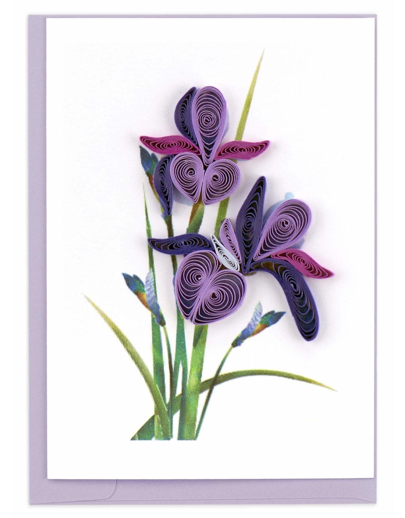 Iris, Quill Gift Enclosure, Vietnam