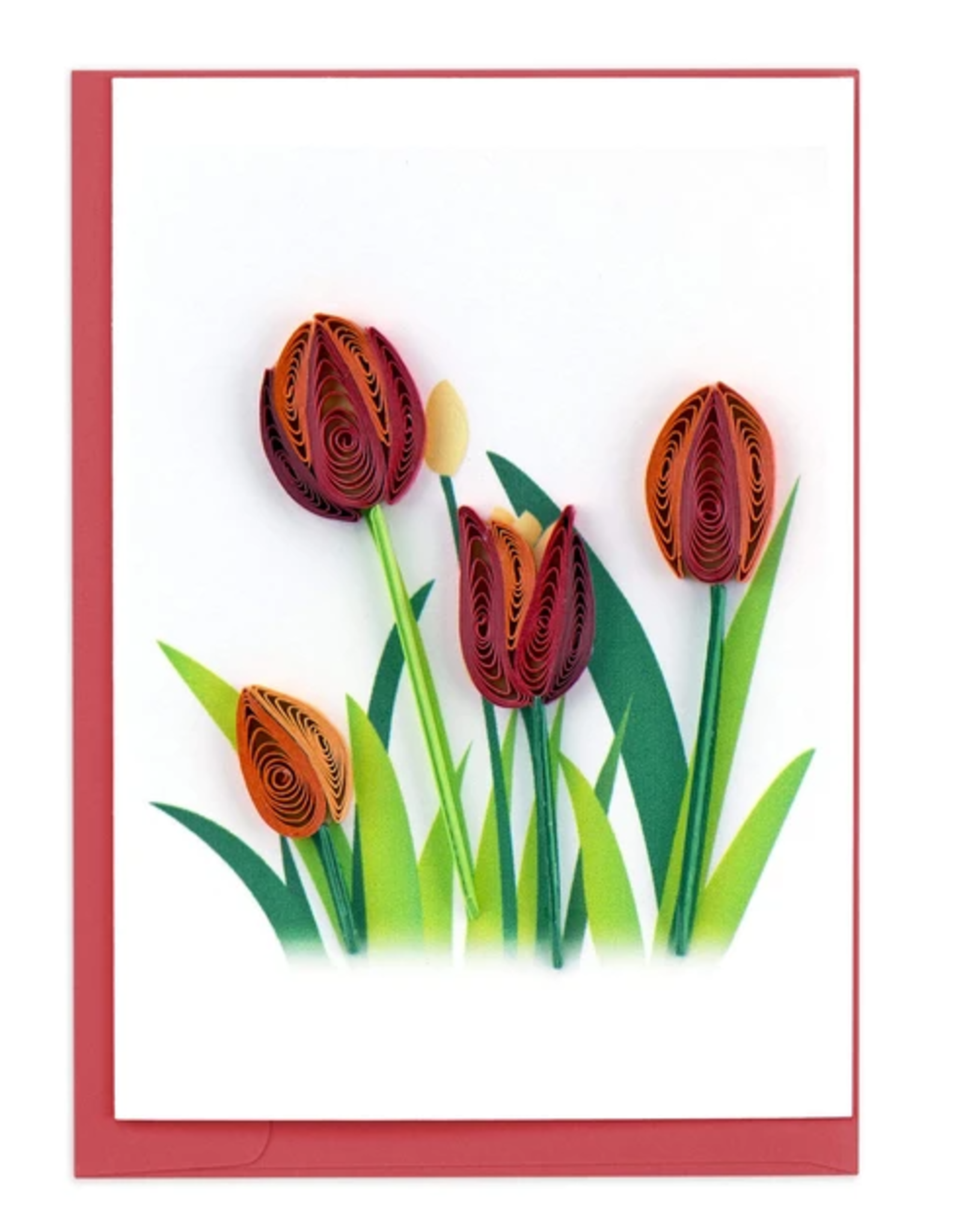 Tulips  Quill Enclosure, Vietnam