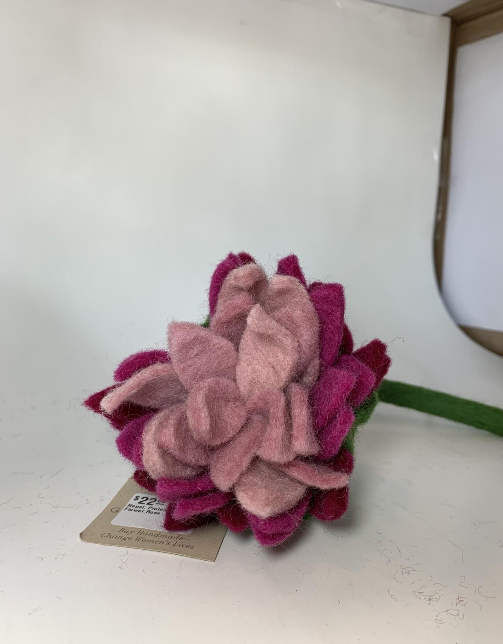 Nepal, Protea Flower ROSE