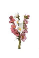 Cherry Blossom White, Nepal