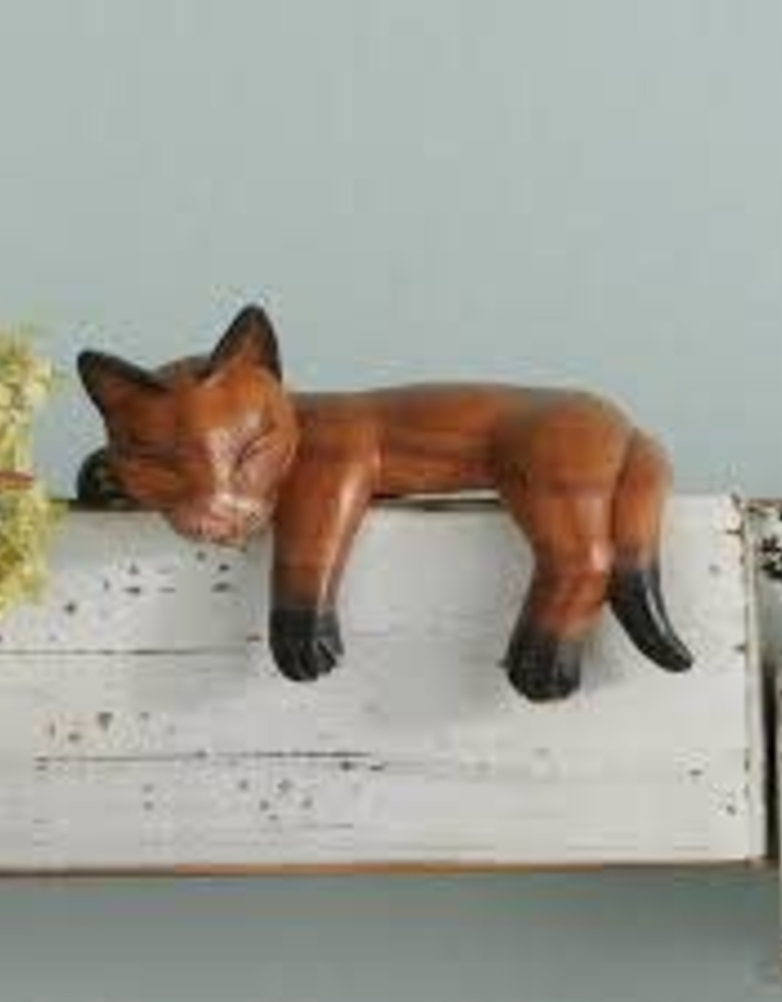 India, Napping Shelf Cat