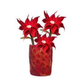 Poinsettia Flower Stem, Nepal