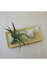 Soapstone Natural Rectangle Dish