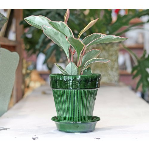 Simona 14cm Pot & Saucer Green Emerald