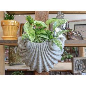 Mediterranean Shell Planter
