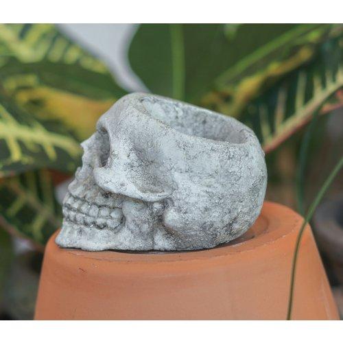 Small Dead People's Stuff Skull Pot