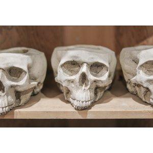 Large Skull Pot