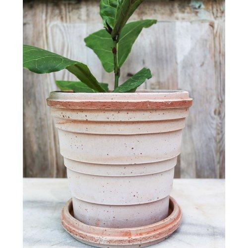 Planet 16cm Pot & Saucer Antique Rosa