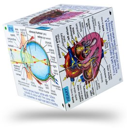 BigJigs Toys Cubebook Human Body
