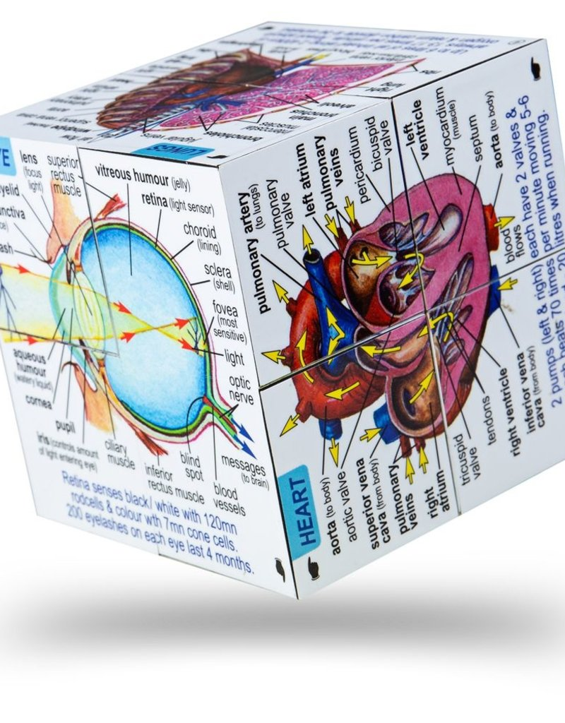 BigJigs Toys Human Body Cubebook