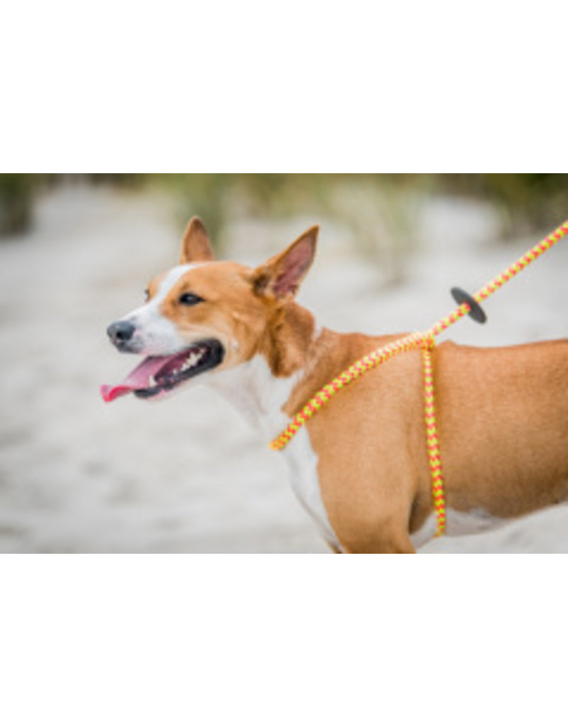 Harness Lead Lotus Small/Medium