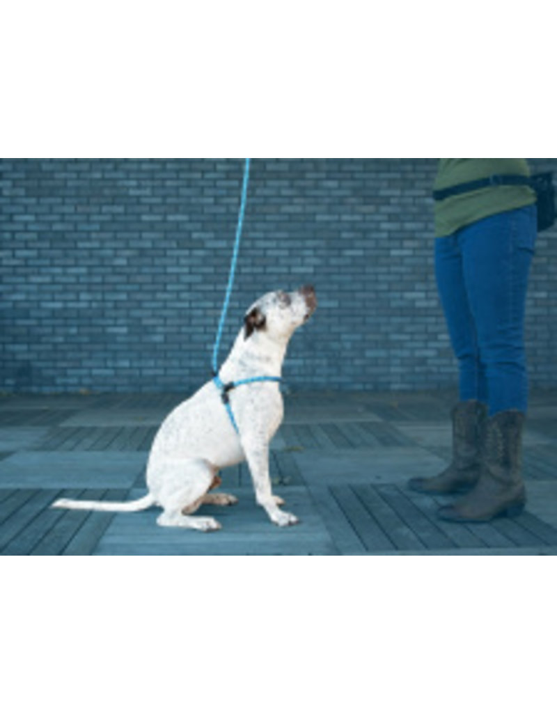 Harness Lead Blue Medium/Large