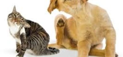Have you noticed an increase in itching or scratching in your pet lately?