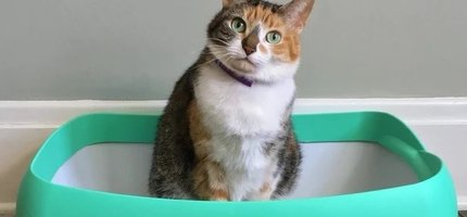 Is your cat having litter box issues?
