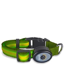Elive LED Dog Collar Green Med