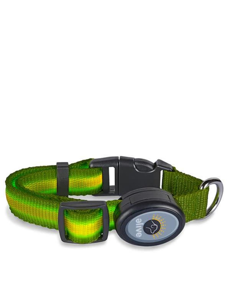 Elive LED Dog Collar Green Small