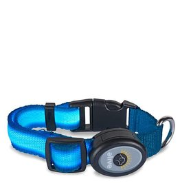 Elive LED Dog Collar Lt Blue Md