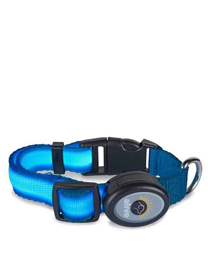 Elive LED Dog Collar Light Blue Medium