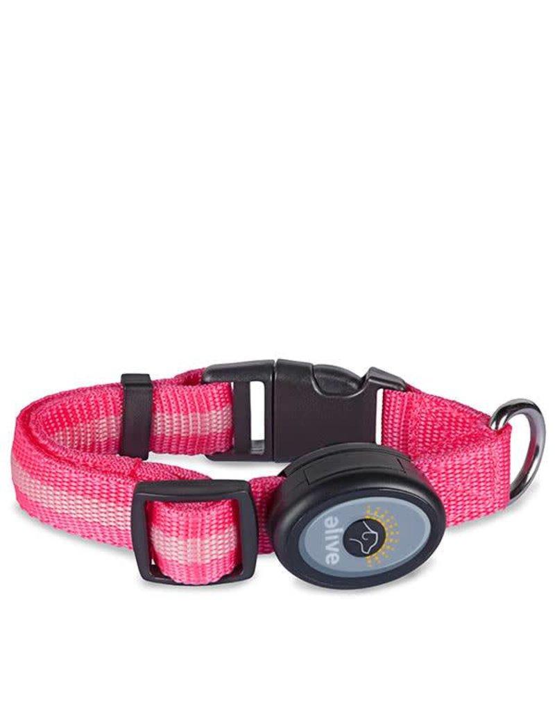 Elive LED Dog Collar Pink Large