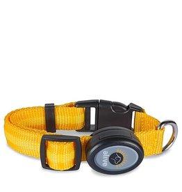 Elive LED Dog Collar Yellow Medium