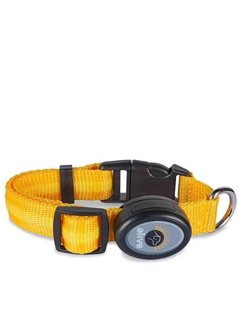 Elive LED Dog Collar Yellow Medium
