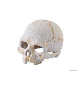 Exo-Terra Primate Skull Small